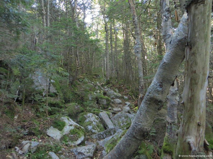 Horn Spur trail.JPG