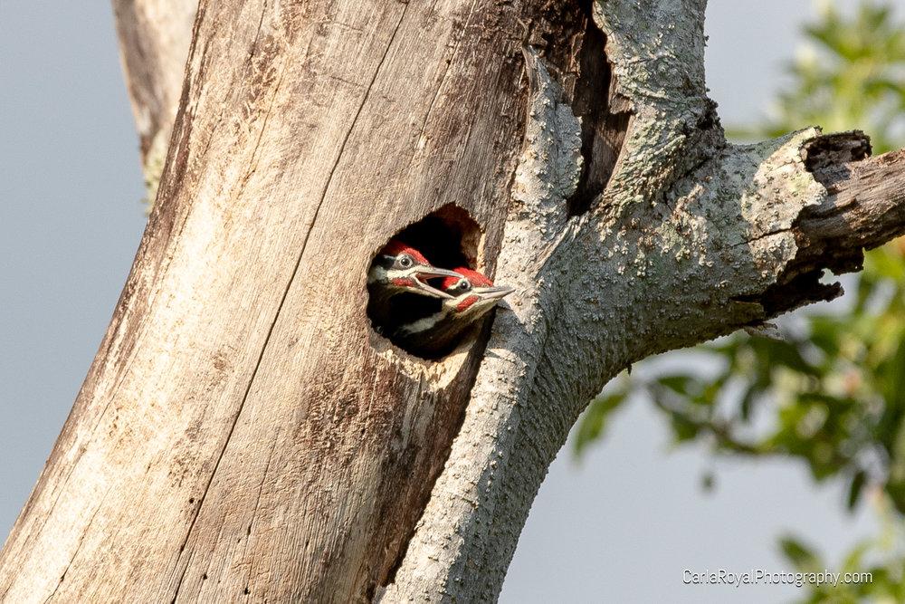 woodpecker-9.jpg