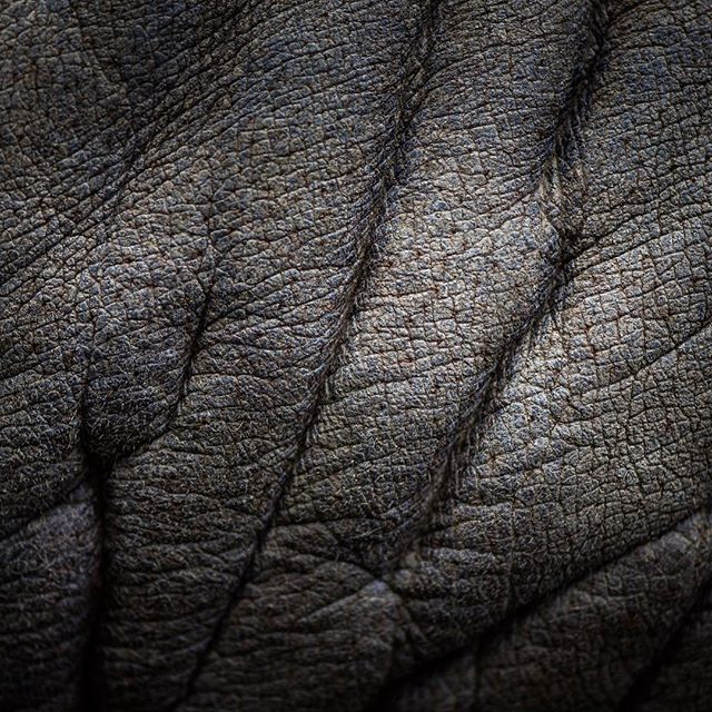 Can you guess what we are looking at? . It is a very special animal! . #guessinggame #guesswhat #instaanimal #animals #wildlifeplanet #earthimage #globaldaily #WildlifeAddicts#Wildlifepage #discoverwildlife #anmlsworld #exclusive_animals#animalplanet_Fan #wildlifecentral #insta_animal #naturegeography #natureaddict #earthimage #allnatureshots #discoverearth #nature