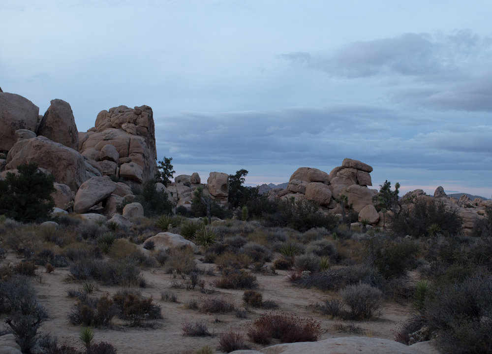 This place is amazing. - We're coming back for you Joshua Tree.
