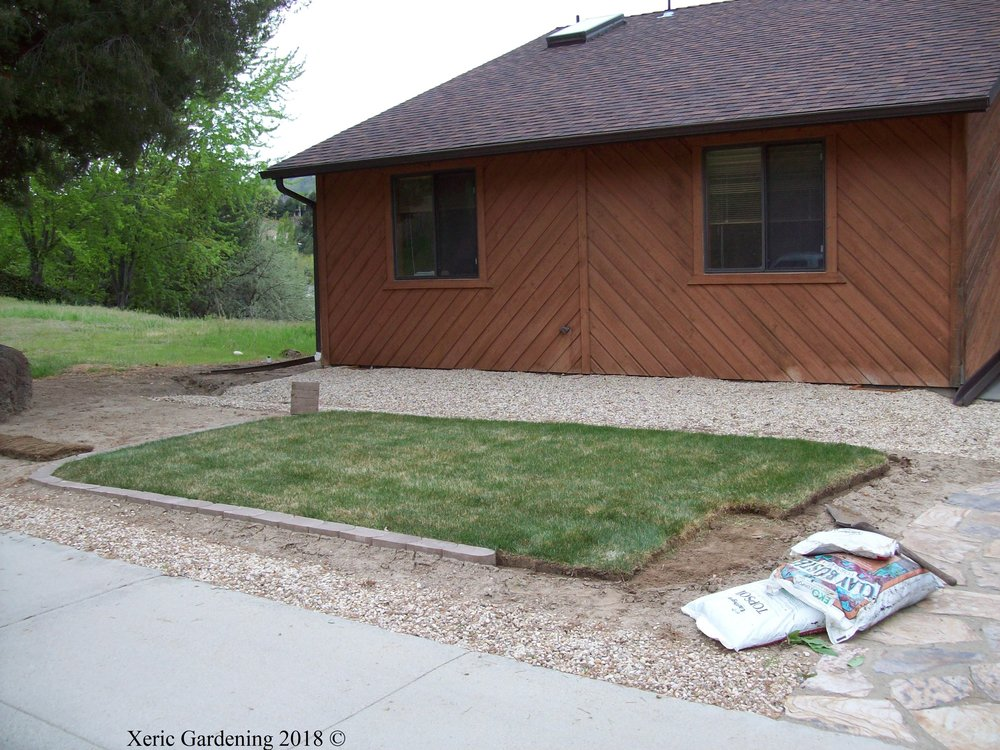 YEAR 1  Here is a good example of lawn removal before we started the xeriscape. After, we added some topsoil to create small berms and brought in some ornamental stone.