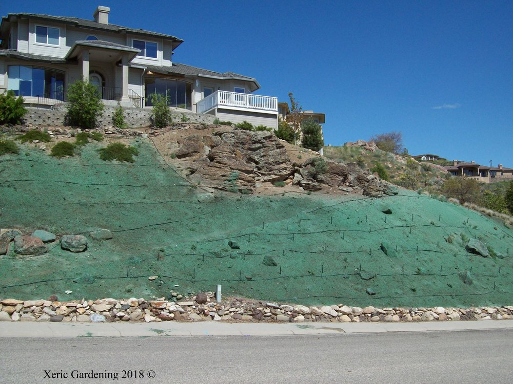 YEAR 1    This hill had erosion problems, so we hydroseeded with native grasses and planted native foothills shrubs: sagebrush, rabbitbrush, bitterbrush. Client's preference was to design so there would be no future supplementary watering.