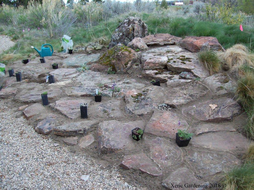 Buschert Rock Garden 1.JPG