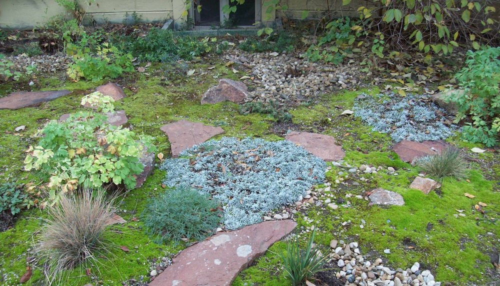 Bare Ground/Moss - This client chose not to mulch at all. Eventually, native mosses will move in and form a beautiful green crust, keeping weeds out. Note: When weeding as the moss is growing in, it's important not to cultivate the soil too much. This will uproot the moss.