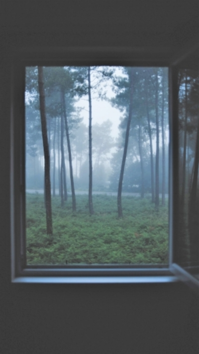 window opened up to forest.jpg