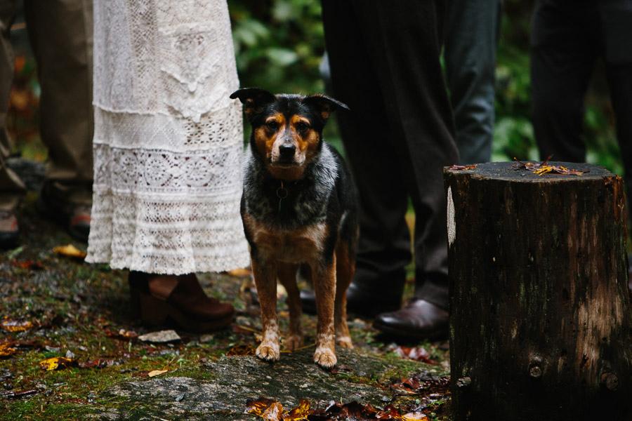 056-asheville-north-carolina-camp-wedding-destination-wedding-photographers-the-livelys-3.jpg