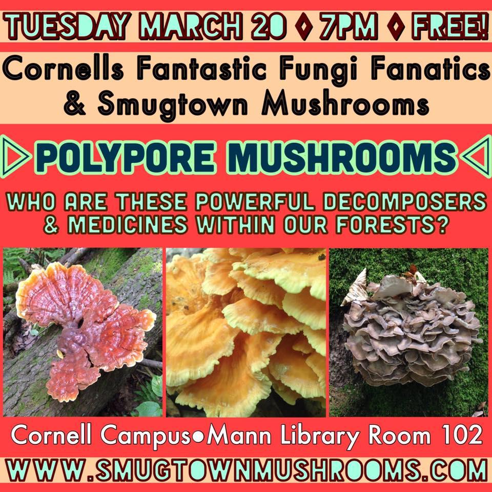 Workshops & Events — Smugtown Mushrooms