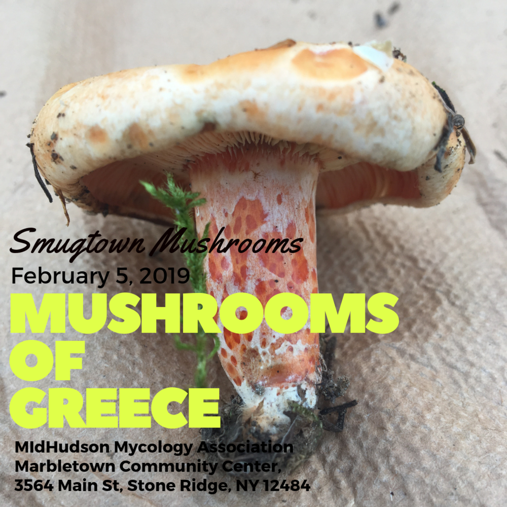 Mushrooms Of Greece(1).png