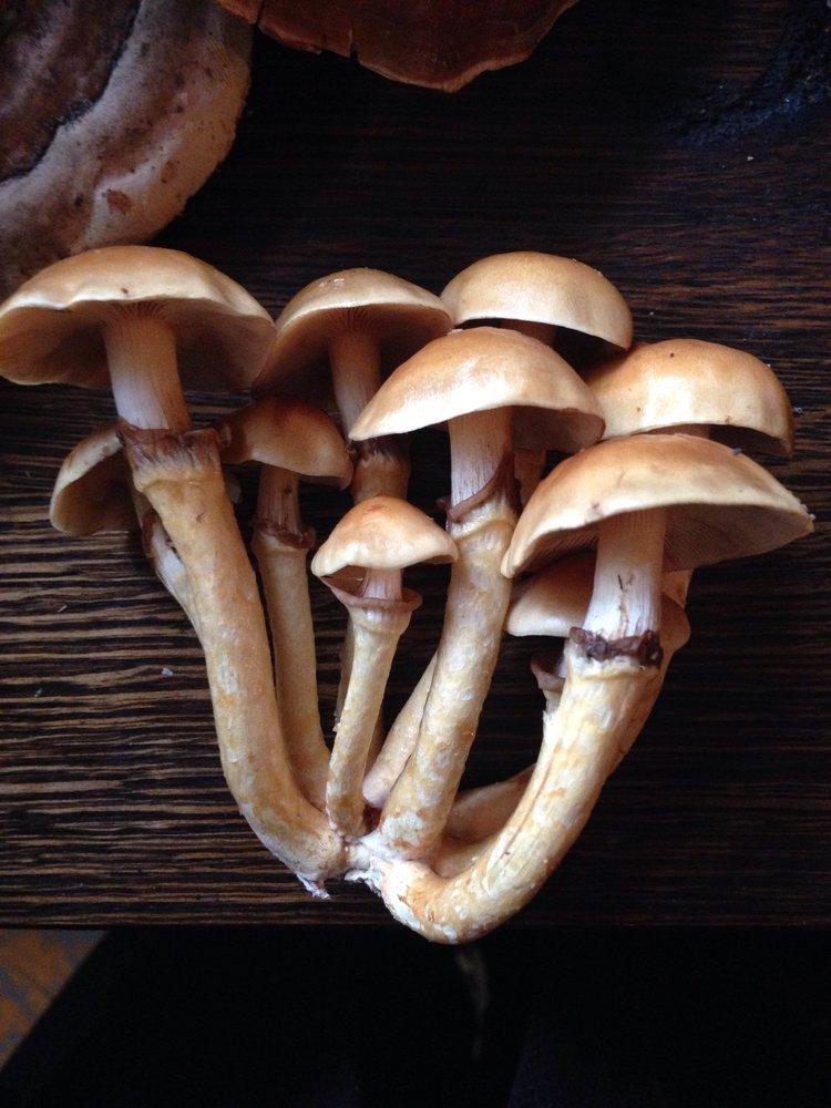 Sawdust Spawn — Smugtown Mushrooms