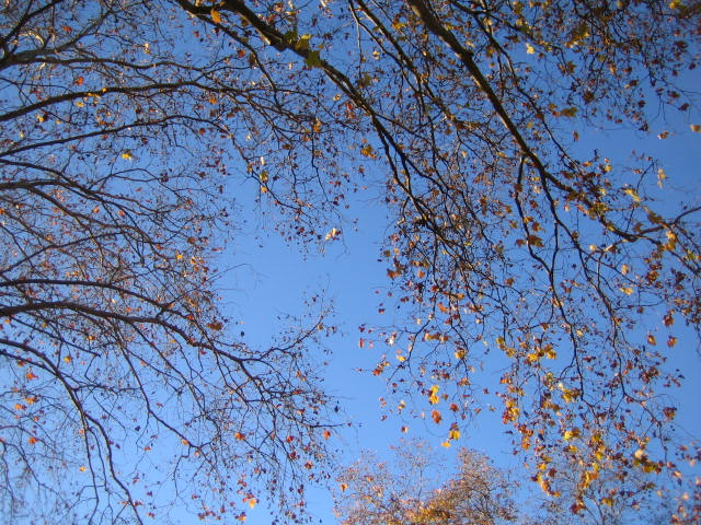 December 2009 001.jpg