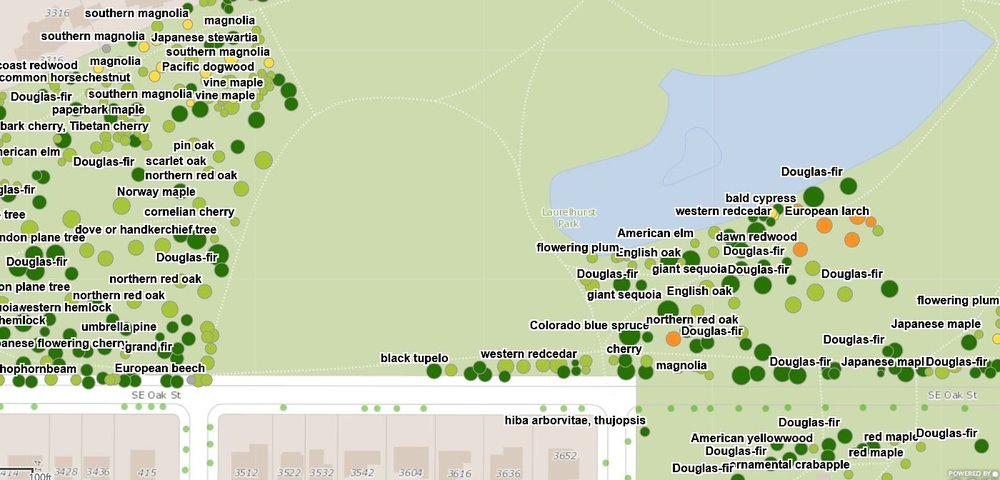 A small taste of Portland's ridiculously robust tree inventory map. Every tree in Portland has been cataloged.
