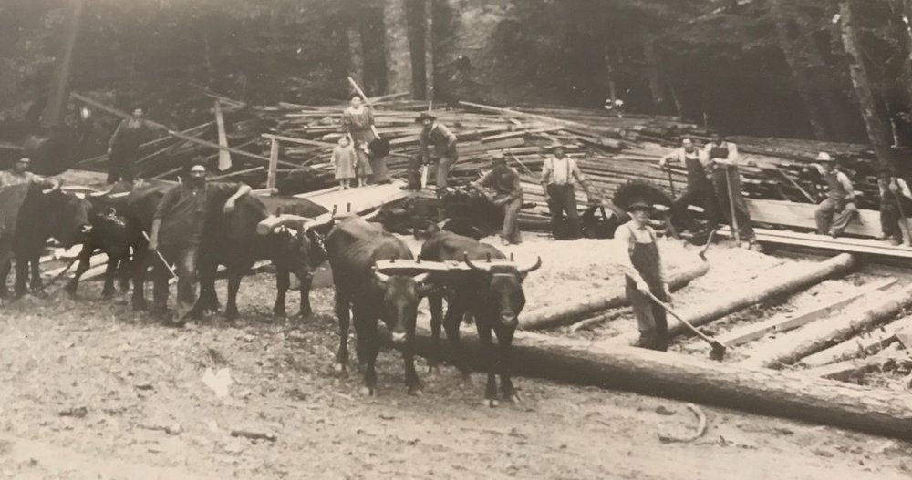 Drake McConnell (Tonya's great-grandfather) with his family, employees, and a team of oxen all slowing down from a long day of logging for a brief, uncharacteristic moment to pose for a photo.