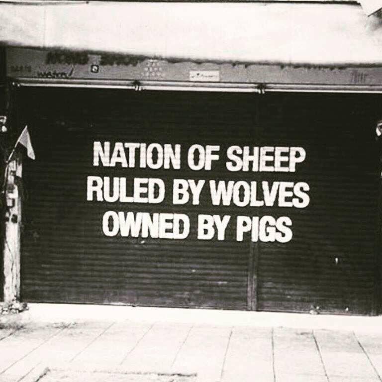 sheeps .jpg
