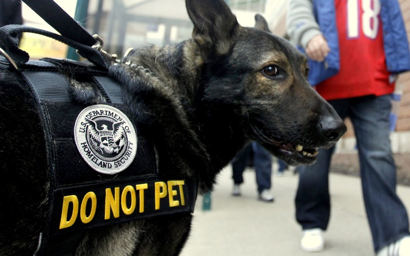 homeland security dog .jpg