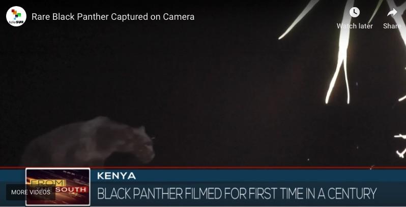 black panther kenya.jpg