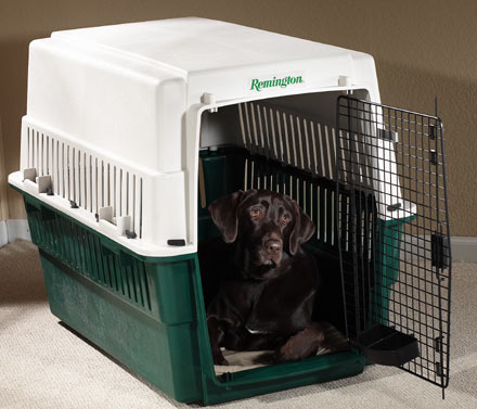 dog_in_crate_mtap.jpg
