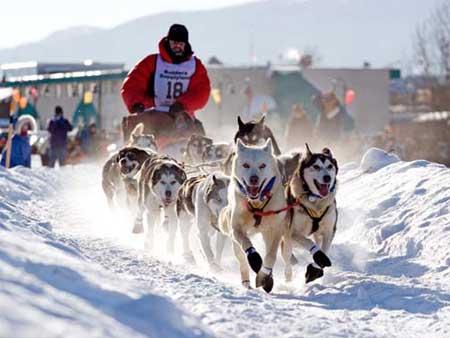 IDITAROD RACE -