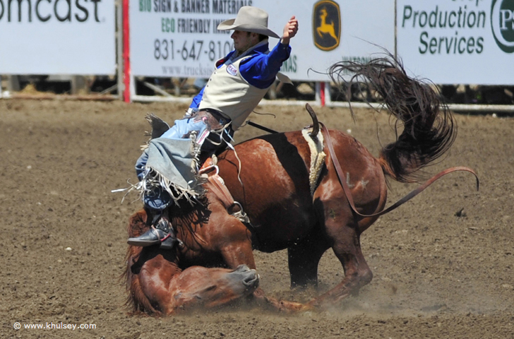 RODEO ANIMALS -
