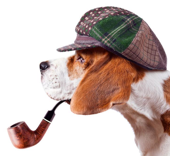 beagle detective.jpg
