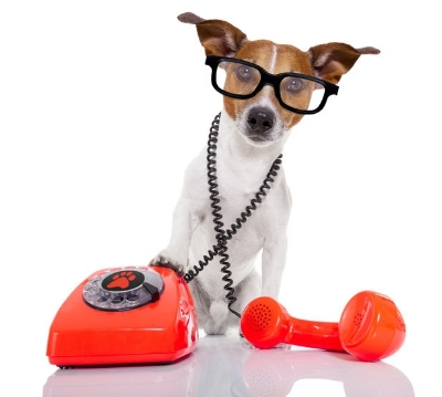 dog and phone.jpg