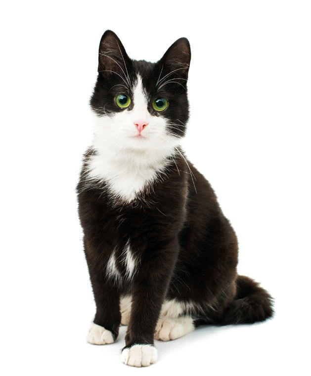 black and white cat.jpg