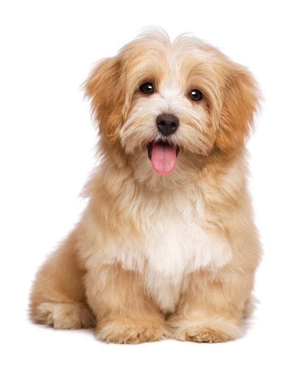 fluffy dog.jpg