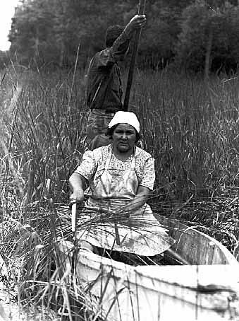 Grace Rogers gathering wild rice near Walker, MN, 1939. Minnesota Historical Society Collections.