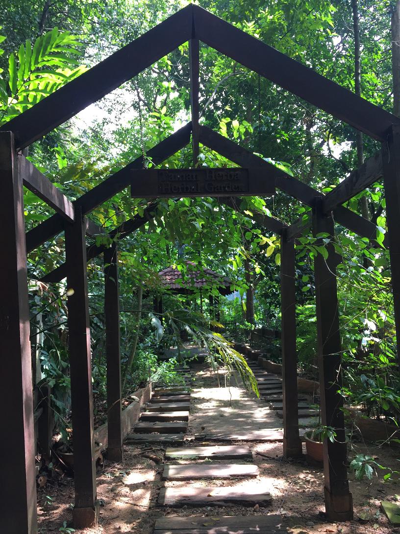 yoga-detox-retreat-kuala-lumpur-herbal-garden.png