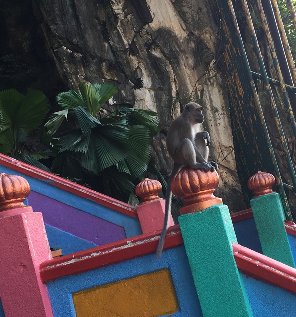 kuala-lumpur-yoga-detox-retreat-monkey.png