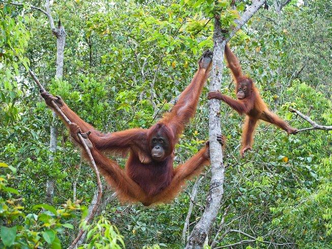 12-day-yoga-retreat-in-malaysia.png