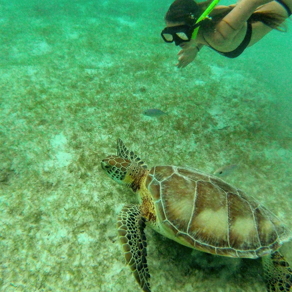 turtle cancun 2016 2.png