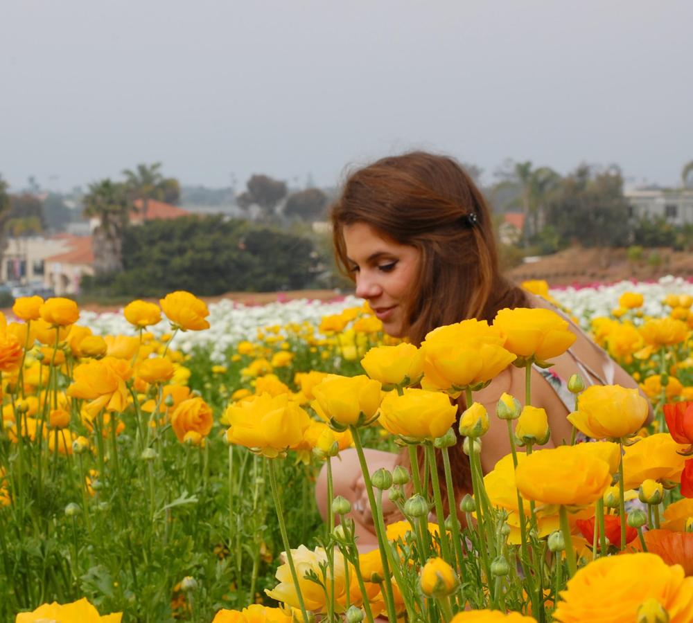 flower fields six.png