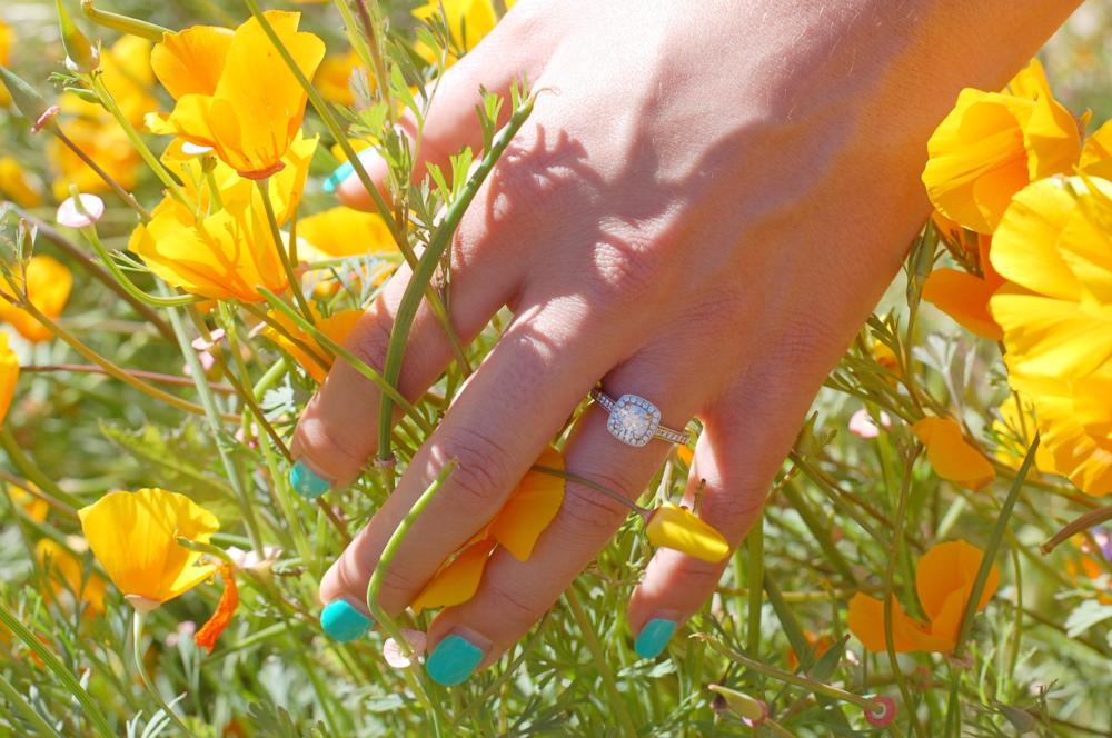golden poppies 3.png