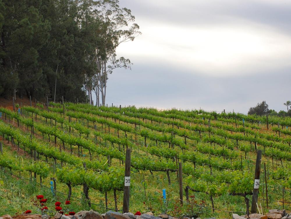 vineyards.png