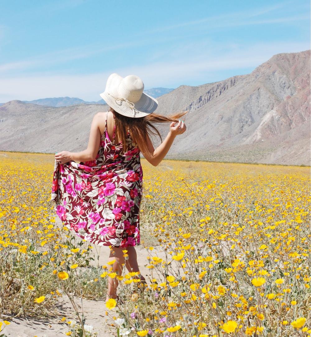 4.Wildflowers in Anza-Borrego Desert State Park -