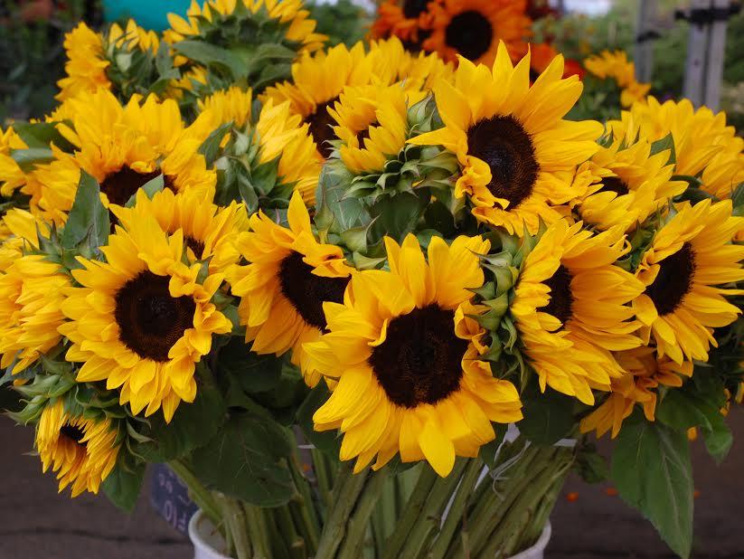 Hidalgo Flowers -