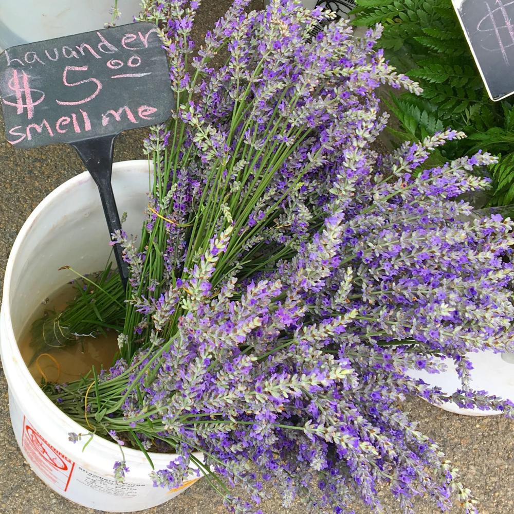1 lavender.png