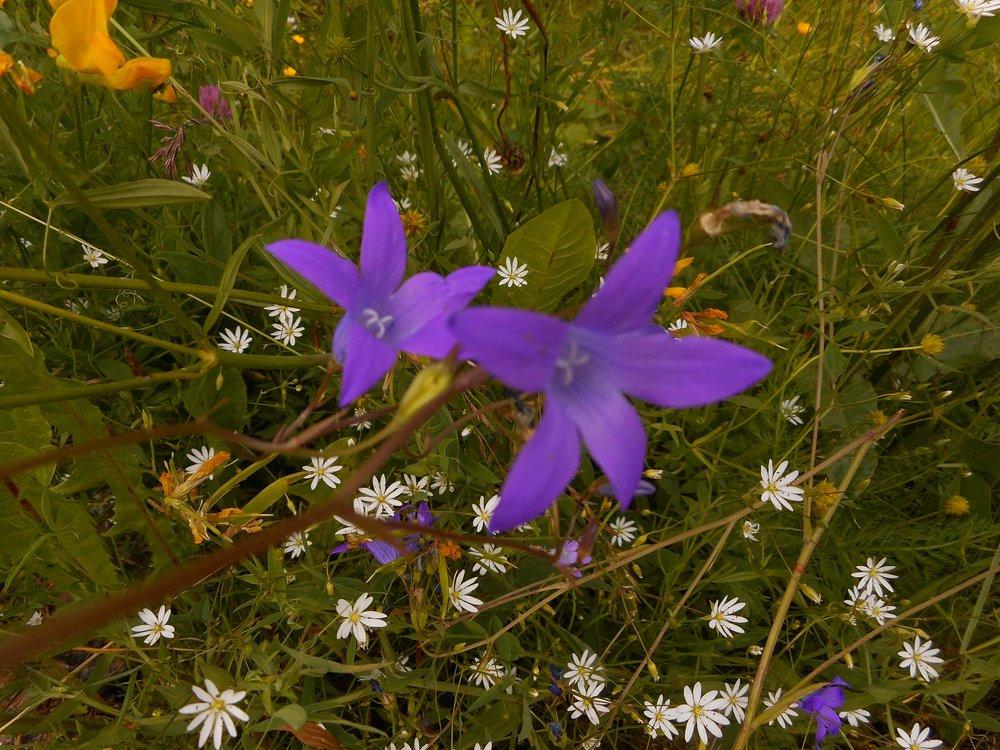 Beautiful wild flowers Helsinki