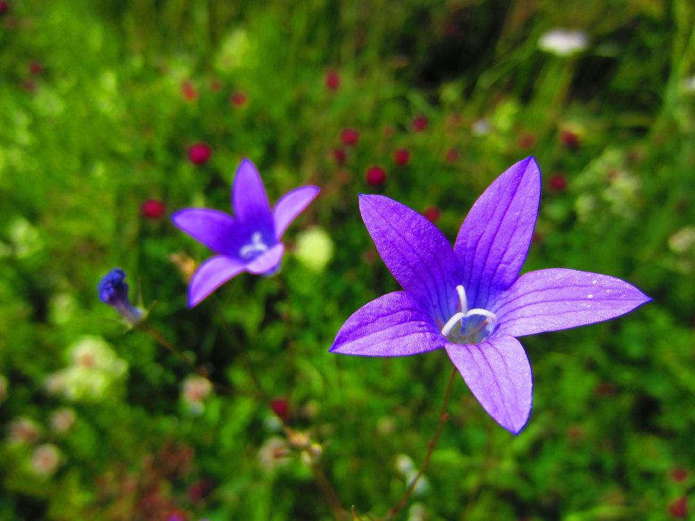 Beautiful flowers in nature trip around Helsinki