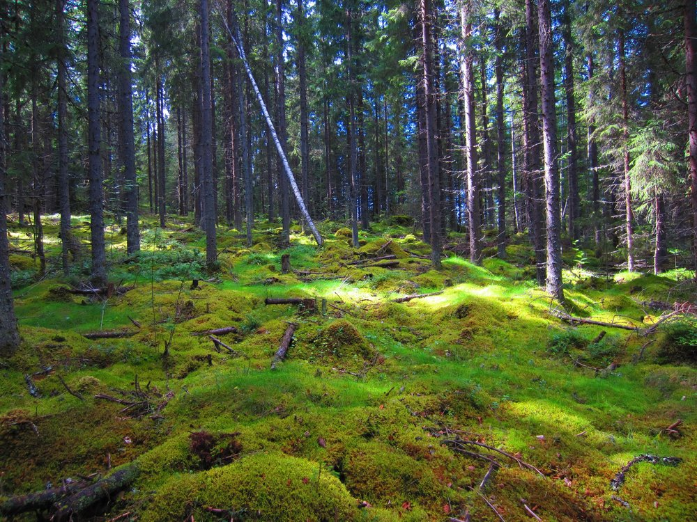Finnish forest guided private nature trips