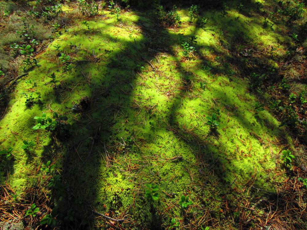 Nuuksio Forest