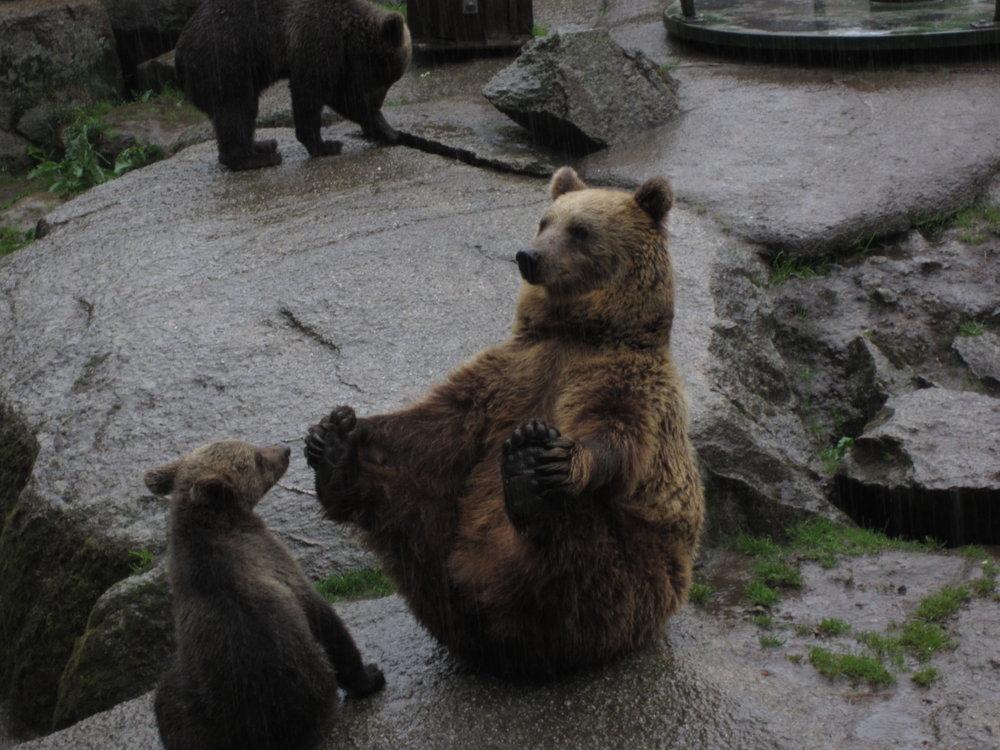 Minni bear making yoga