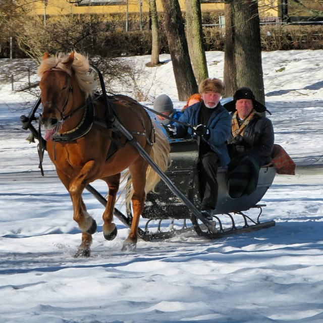 #horsesleighride at #ullanlinna in the center of #helsinki !!!! #winterfun #lomitravels #lominaturetravels  #visitfinland #visithelsinki  #myhelsinki #helsinkilove #postcardsfromhelsinki #helsinkioffical #seemycity #helsinkisightseeing #helsinkicitywalk #finnishwinter #springinfinland #crazyfinland