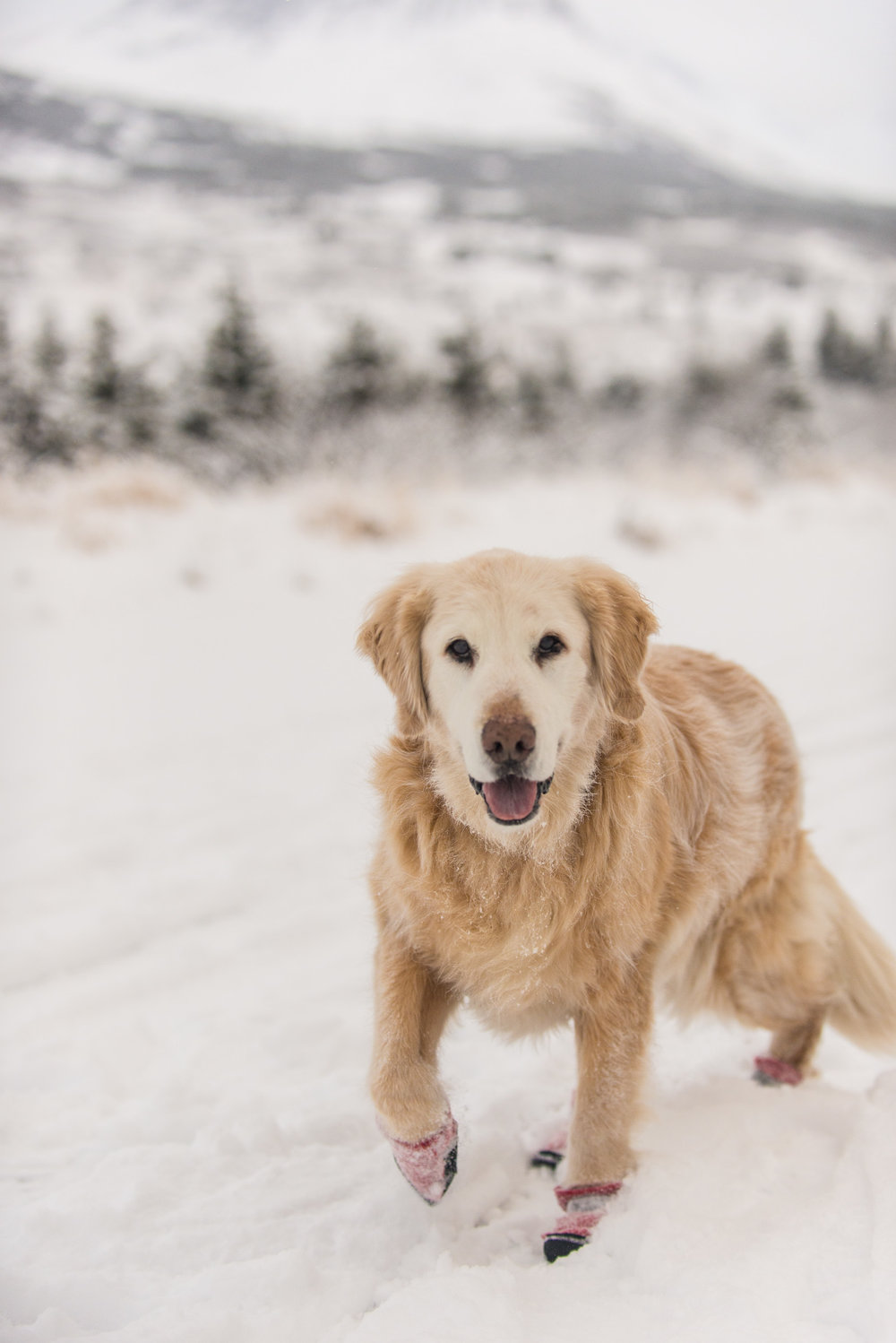 Meredith Berg Photography Anchorage Alaska Dog Pet Photographer Shelby Giese-183.jpg