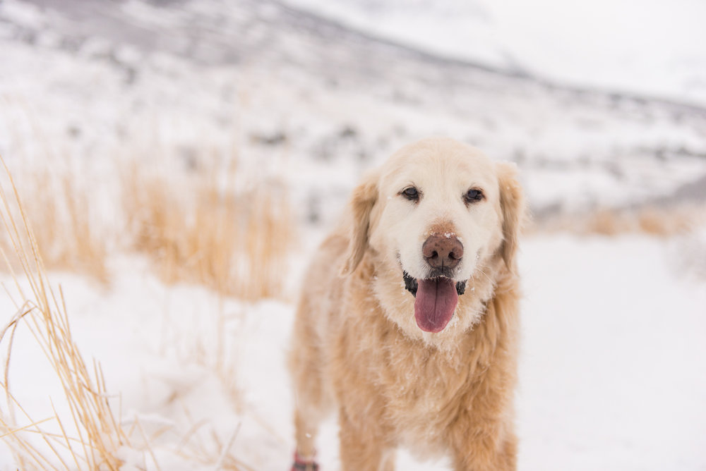 Meredith Berg Photography Anchorage Alaska Dog Pet Photographer Shelby Giese-270.jpg