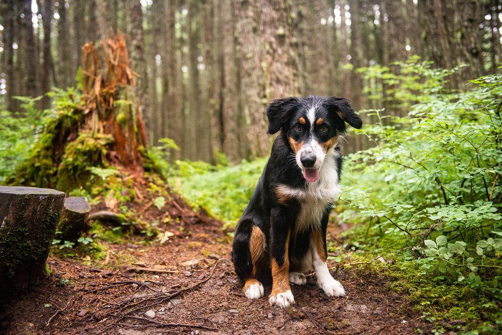 Meredith Berg Photography Anchorage Alaska Dog Pet Photographer Auggie Hernandez MBP-263-Edit.jpg