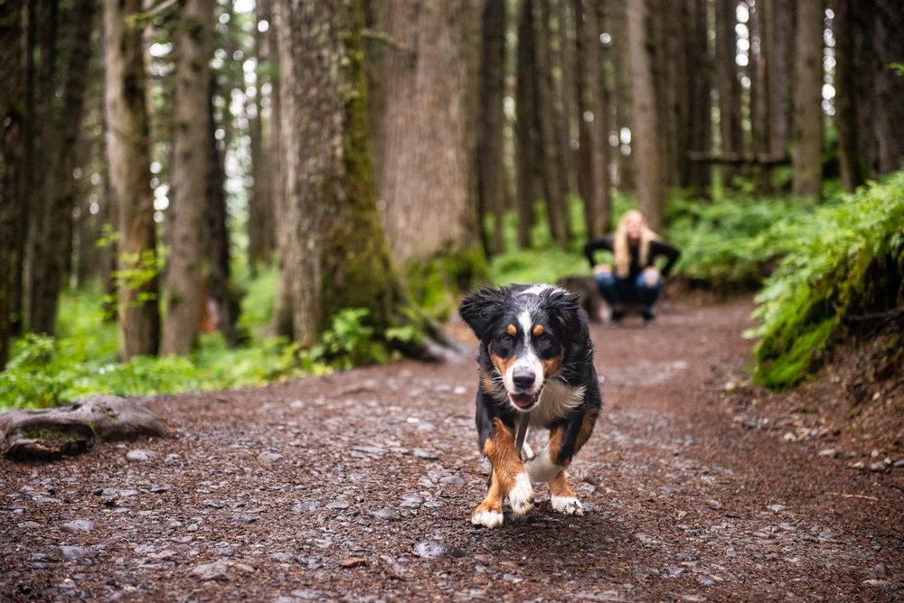 Meredith Berg Photography Anchorage Alaska Dog Pet Photographer Auggie Hernandez MBP-222.jpg