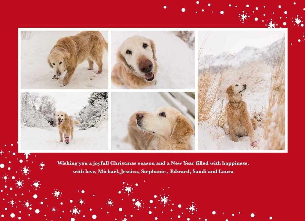 Christmas Cards — Meredith Berg Photography | Anchorage Alaska pet ...
