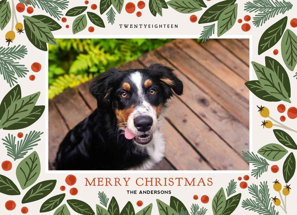 Christmas Cards — Meredith Berg Photography | Anchorage Alaska pet ...