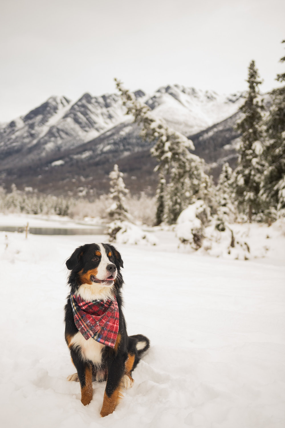 Meredith Berg Photography Anchorage Alaska Dog Pet Photographer Yukon Gethan-107-Edit.jpg